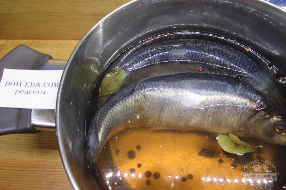 Рецепты солить сельдь в домашних условиях 791
