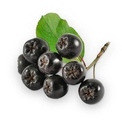 Сорта черноплодной рябины для сибири